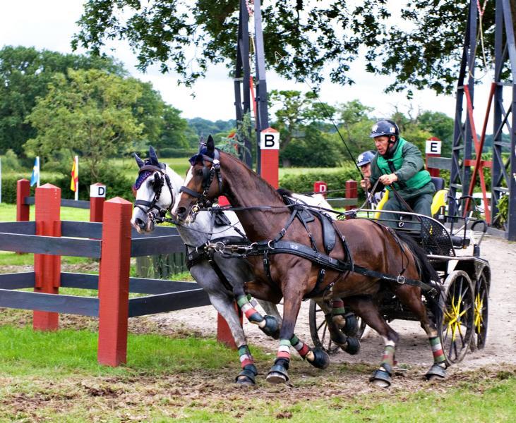 Gespannfahren zählt zu den sehr actionreichen Pferdesport-Disziplinen. © Shutterstock   Mairion Matthias