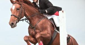 Im Parcours müssen Pferde die genauen Gegebenheiten der Hindernisse schon beim Anreiten speichern, da sich das Hindernis zum Zeitpunkt des Absprungs im blinden Bereich befindet. © Shutterstock/ lukovic photograpy