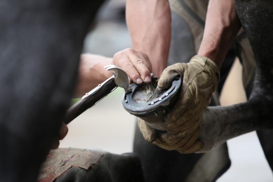 In Österreich gibt es derzeit rund 400 Hufschmiede, die ihren Beruf durch eine fundierte Ausbildung erlernt haben. © Shutterstock