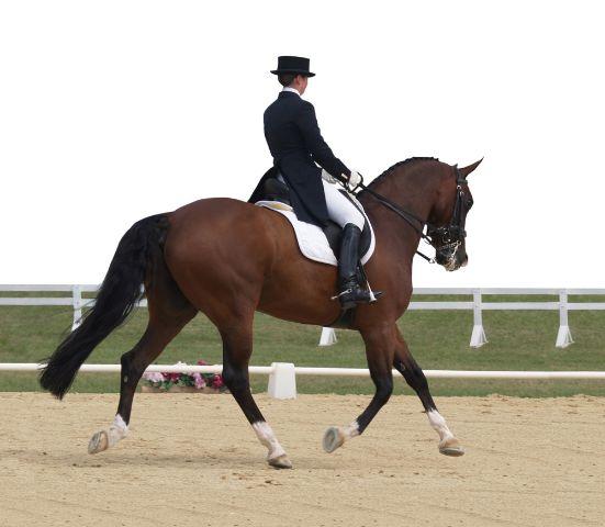 """Graziös, koordiniert, ausdauernd: All diese Eigenschaften besitzen wir Reiter - also von wegen """"Reiten ist kein Sport"""". © shutterstock / 4646320"""