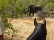 """Auf dem Rücken eines Pferdes kommt man besonders nah an Afrikas """"Big Five"""" heran. © African Big Five Horse Safari"""