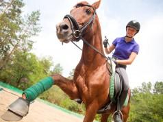 In Österreich gibt es zahlreiche Möglichkeiten, sich im Bereich des Pferdesports auszubilden. © shutterstock / Yan Lev