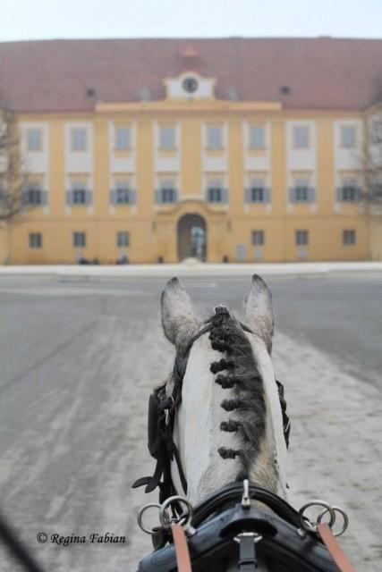 Das erste Fahrsportsymposium in Schlosshof war ein voller Erfolg! © Regina Fabian