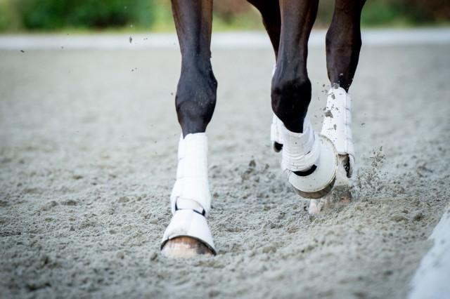 Das Wohlergehen der Pferde darf durch Reitergewicht nicht kompromittiert werden!  © shutterstock / 11A Fotografie