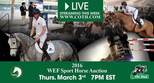 WEF_SportHorses_Auction_2016