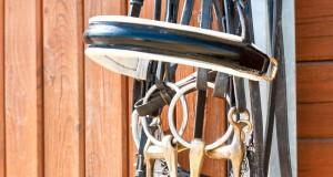 Eine Petition soll die FEI dazu bewegen, Dressurreitern die Wahl zwischen Kandare und Trense selbst zu überlassen. © Symbolbild - Shutterstock / Anna Elizabeth Photography