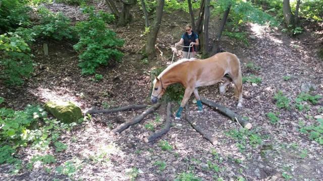Es gibt leichte und schwere Hindernisse. © Extreme Trail Park Sommerein