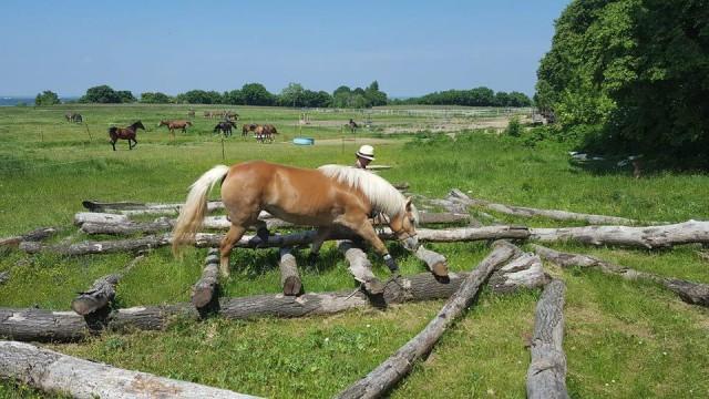 Koordination, Konzentration und die Pferd-Mensch-Kommunikation werden geschult. © Extreme Trail Park Sommerein