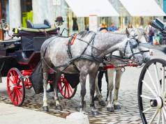 Die eingespannten Pferde gingen noch auf dem Reiterhof durch. © Symbolbild - shutterstock / Ekaterina Pokrovsky