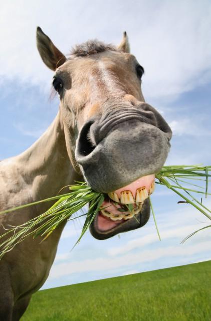 """Auf mehr """"Grünzeug"""" sollten auch die Reiter setzen. © Shutterstock/Nate Allred"""