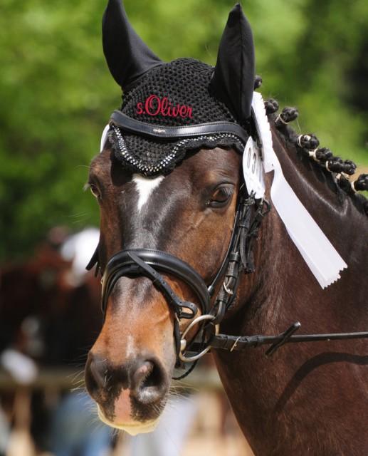 s.Oliver setzt mit dem Titelsponsoring vom s.Oliver Vienna Masters ein klares Zeichen im heimischen und internationalen Pferdesport. © s.Oliver Vienna Masters