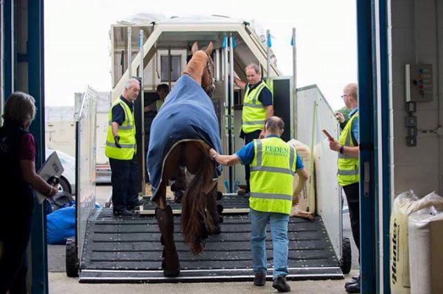 Dürfen Pferde in Zukunft trotz Brexit problemlos von und nach Großbritannien transportiert werden? ©FEI JonStroud