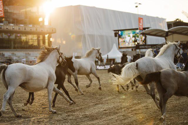 Einfach schön. Die Lipizzaner Stuten und Fohlen der Spanischen Hofreitschule. © Valerie Oberreiter