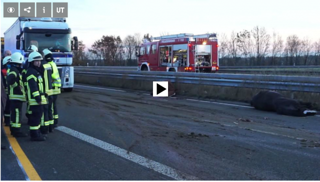 Bei einem grauenhaften Unfall auf der A65 in Deutschland kamen heute acht Pferde ums Leben. © Symbolbild - Pixabay