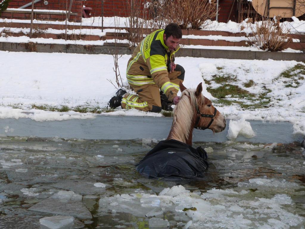 Auf dünnem Eis. Cottbuser Feuerwehr rettet Pferd aus eisigem Pool