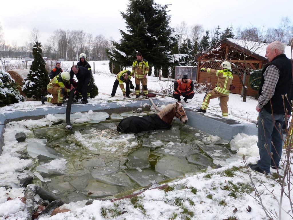 In Cottbus: Großeinsatz über mehrere Stunden: Feuerwehr rettet Pferd aus