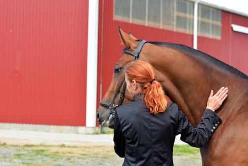 Du übst nicht nur für dich! Auch dein Sportpartner Pferd profitiert davon! © Shutterstock / Multi-Share