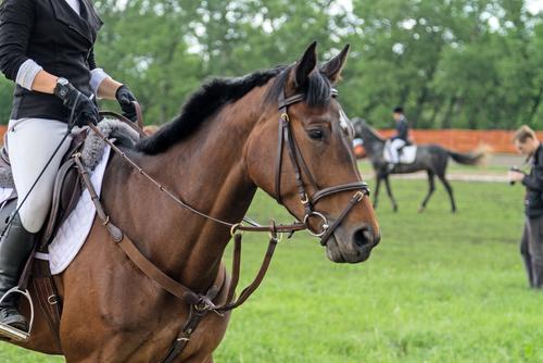 Ängste und Unsicherheiten können sowohl bei Pferden, als auch bei Reitern auftreten. © Symbolbild / Shutterstock Multi-Share