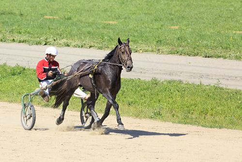 Egal ob in der Kutsche oder auf dem Pferd - den Überblick u behalten ist wichtig!  © Shutterstock Multi-Share