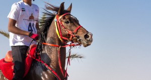 FEI Secretary General provides overview of measures to address horse welfare issues in Endurance. © Shutterstock/ Kertu Secretary General provides overview of measures to address horse welfare issues in Endurance. © Shutterstock/ Kertu