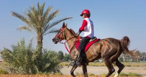 Distanzreiter aus Deutschland erhalten vorerst keine Startgenehmigungen für Dubai. © Symbolbild - shutterstock / Kertu