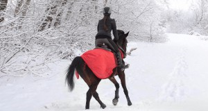 Beim Reiten im Winter, vor allem im Schnee, gibt es einige Dinge, die man beachten sollte. © shutterstock / horsemen