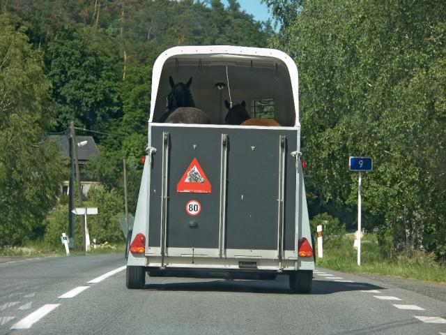 Beim Transport von Pferden ist vorausschauendes Fahren und vorsichtiges Bremsen besonders wichtig. © Shutterstock   Milkovasa