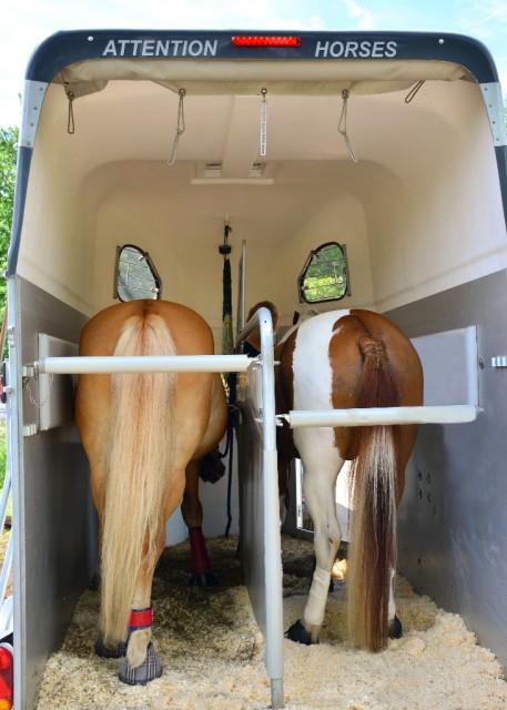 Einstreu und Heu für die Fahrt machen den Ausflug für das Pferd auch noch einmal eine Spur angenehmer. © Shutterstock | Tanhu