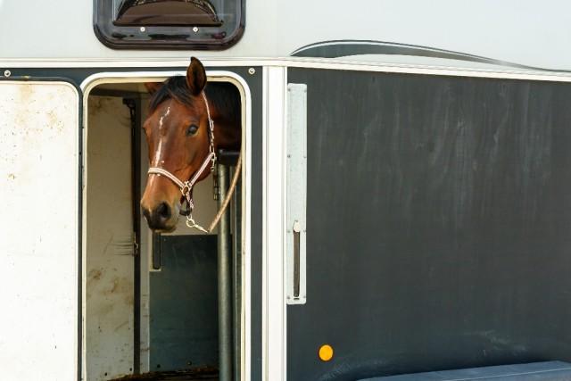 Ein entspanntes Pferd im Anhänger ist das Ziel jedes Verladetrainings. © Shutterstock   Imfoto