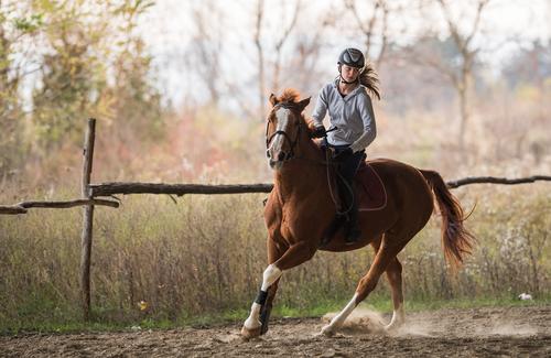 """Schon beim reiten zuhause solltest du deine Umgebung wirklich gut """"scannen"""". © Shutterstock / Multi-Share"""