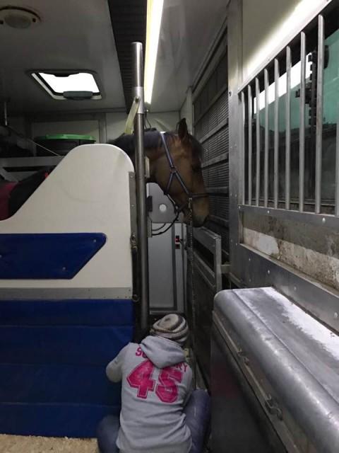 Den weiten Weg nach Arezzo trat Mevisto Reiter Roland mit 12 Pferden an! © Barbara Hubner / Facebook