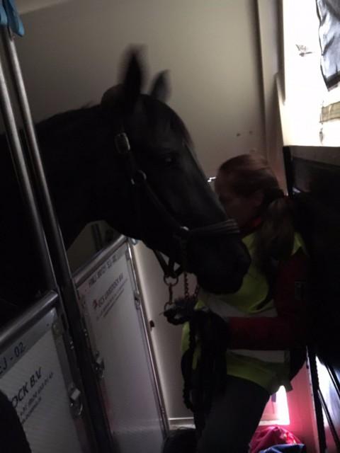 Steffi, die Pflegerin von Isabell Werth, hat sich als Flying Groom nicht nur um ihr Pferd Weihegold, sondern auch ihren Flugpartner Cornet Kalua und die anderen Vierbeiner gekümmert. © Alex Stork