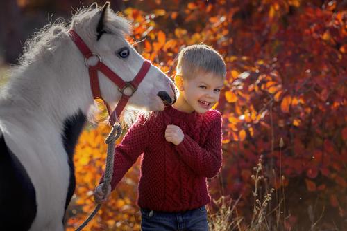 Pferde werden für ihre Reiter oft zu den besten Freunden. © M Relova / Shutterstock