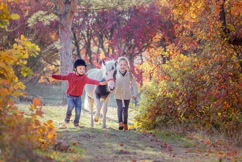 Der Weg, den wir mit unseren Pferden gehen lohnt sich immer. © M Relova / Shutterstock