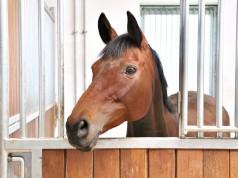 Auf der Plattform stablebooking.com kann man für seine Pferde kurzfristige Unterkünfte finden. © ILiyan