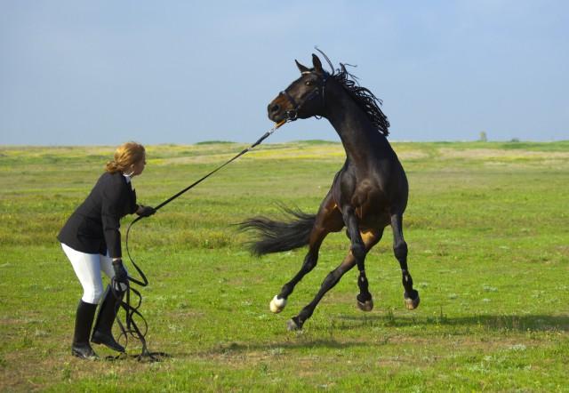 Reiter können Ängste überwinden! © Taiga / Shutterstock