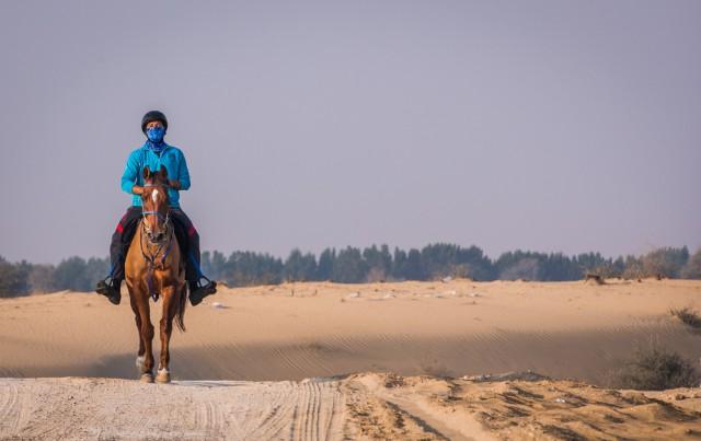 Die Boudheib Initiative soll den Distanzreitsport wieder pferdefreundlicher machen. © shutterstock / Katiekk