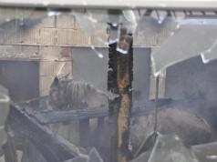 Romy konnte von der Feuerwehr noch aus den Flammen gerettet werden, verstarb jedoch an den Folgen einer Rauchgasvergiftung. © BFV Weiz