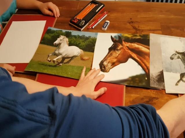Video Diy Pferde Zeichnen Leicht Gemacht Equestrian Worldwide