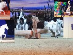 EQWO.net zeigt Highlights der HOP TOP Show Passepartout auf der EQUITANA 2017!