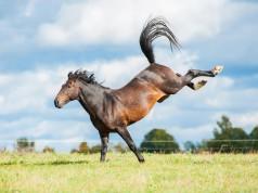 Ein dreijähriges Mädchen wurde nach einem Tritt von einem Pferd verletzt in ein Krankenhaus geflogen. © shutterstock / Grigorita Ko