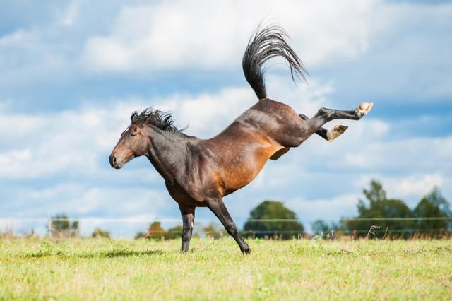 Dreijähriges Mädchen in der Steiermark von Pferd getreten