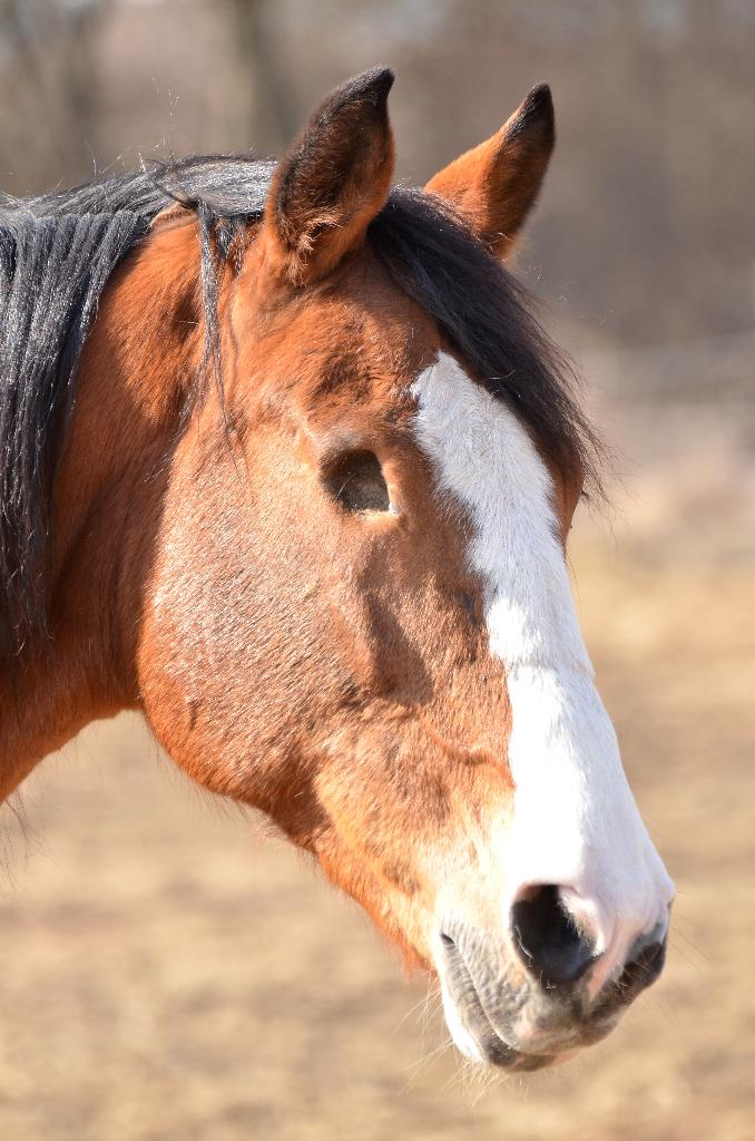 Kann Ein Ein 228 Ugiges Pferd Triple Crown Sieger Werden