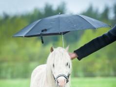 Frischluft bei jedem Wetter, denn Hauptsache unser vierbeiniger Liebling wird nicht nass! © Shutterstock/Grigorita Ko