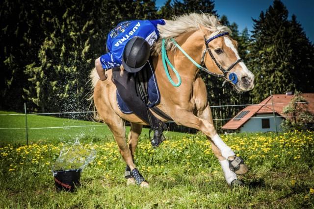 Saskia Pree und ihr Gaius zählen bei der Österreichischen Meisterschaft Mounted Games zu den Favoriten. © www.gutenthaler-fotografie.at