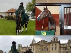 Shanghai Joe, das Pferd von Shane Rose (AUS), musste nach einem Sturz bei den Badminton Horse Trials eingeschläfert werden
