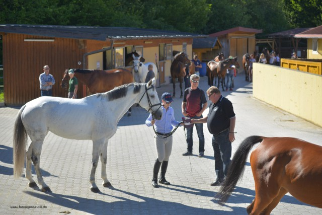 Den Vet Check bei den Amadeus Junior Specials in Lamprechtshausen haben bereits alle Pferde positiv absolviert. © Fotoagentur Dill