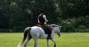 Lightly work your horse the next day, preferably on a loose rein. © Shutterstock | Joy Brown