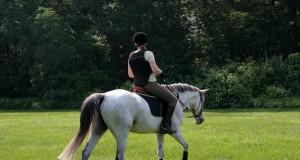Arbeitet eure Pferde am Tag nach dem Wettkampf nur leicht, vorzugsweise sogar am langen Zügel.© Shutterstock | Joy Brown