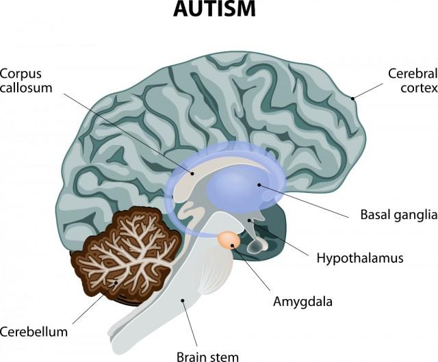 Furcht-Stimuli werden in der Amygdala ausgelöst. © Shutterstock Designua